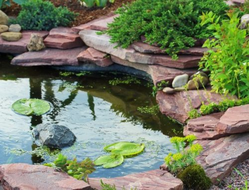Backyard Water Feature Options for Your Next Landscape Design Project
