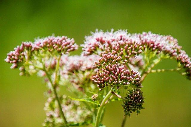 North Carolina Native Plants