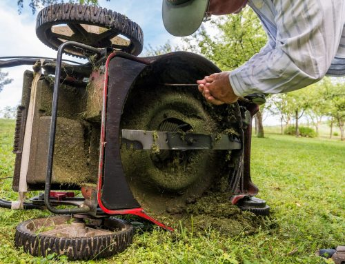 Spring Lawn Maintenance Musts to Prepare for the Year